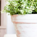 Vintage Farmhouse Style Terra Cotta Flower Pots